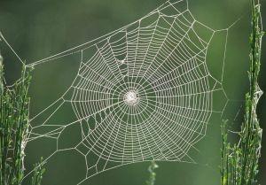 spiderweb Thumb