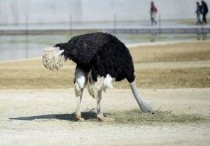 potd-ostrich_3259297kTHUMB