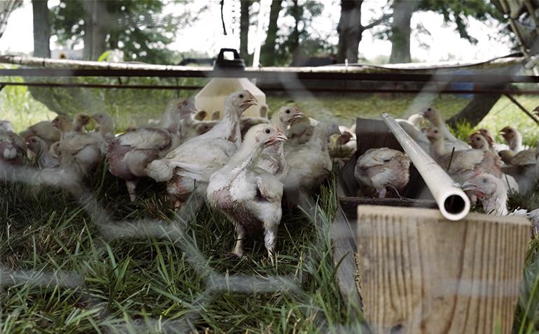 Nature's Gourmet Farm Episode 3